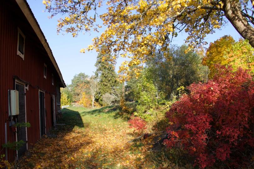 Norrhenninge, Norrtälje, Sverige, höst, autumn, toamna