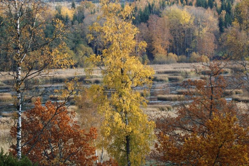 höst, autumn, toamna