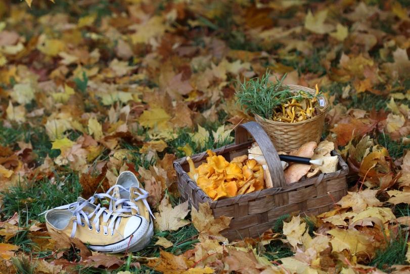 Höst, autumn, toamna, converse