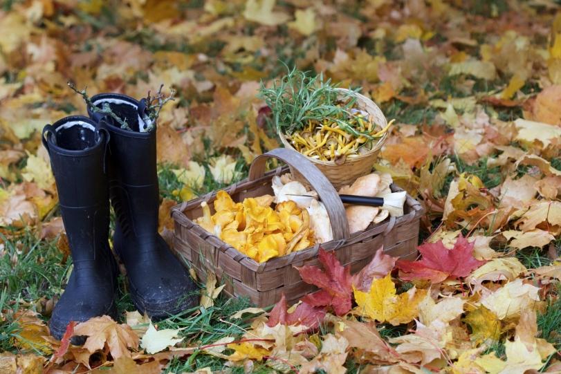 Höst, autumn, toamna,